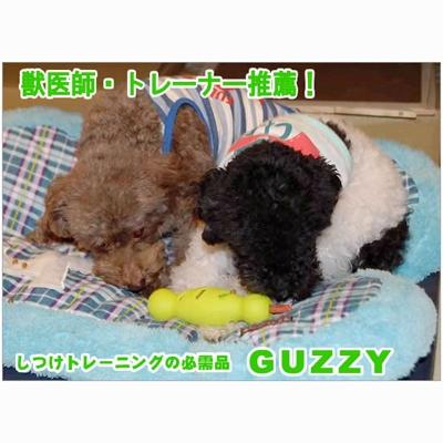 GUZZY ガジィートレジャー S [キャンセル・変更・返品不可]
