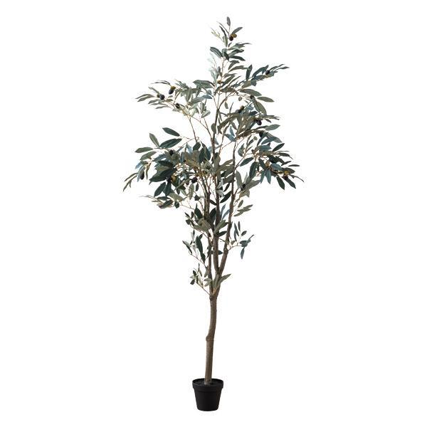 【送料無料】オリーブツリー 80954