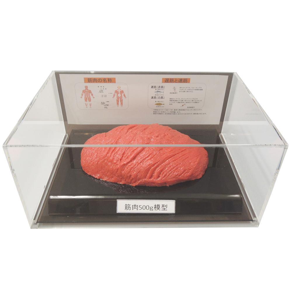 【クーポンあり】【送料無料】筋肉模型フィギュアケース入 500g IP-985 人体筋肉の模型です。
