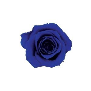 【クーポンあり】【送料無料】verdissimo ヴェルディッシモ バルク ミニローズ ロイヤルブルー 58918