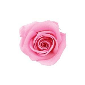 送料無料★バラのプリザーブドフラワー! 【送料無料】verdissimo ヴェルディッシモ バルク プリンセスローズ ブライダルピンク 59208