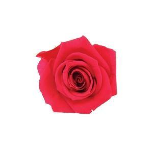 【クーポンあり】【送料無料】verdissimo ヴェルディッシモ バルク プリンセスローズ シャイニーレッド 59237