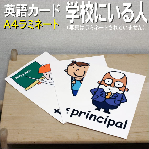 Flash card (infant) English card ■ A4 size ■ laminating processing ■  English teaching materials learning English word education pronunciation