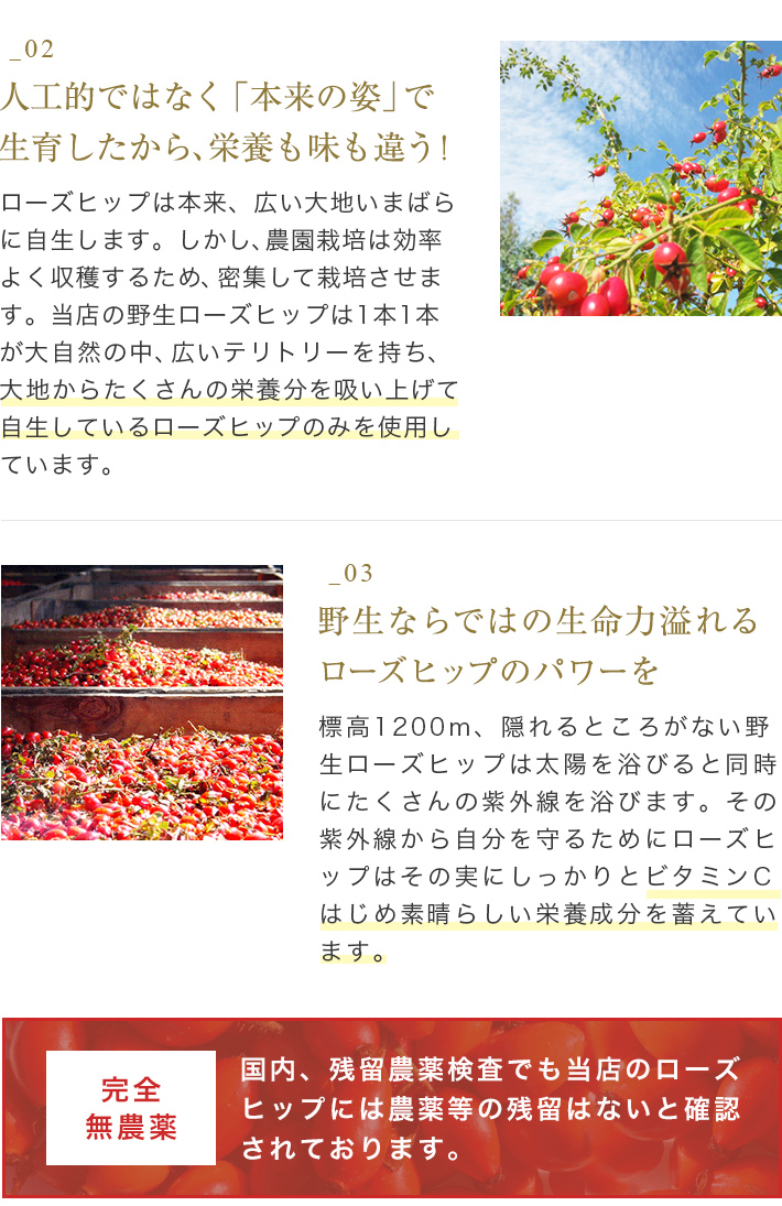 ""\150 per week or more ranked # 1! And it's real! Eat rose hips tea """"delicious taste is different! """"Vitamin C concentration of the best! Wild rose hips tea [fully organic: FINE CUT (fine cut) 500 g""710|1095|?|en|2|76a7dd7b56715225695807a9d09e911b|False|UNLIKELY|0.3099573254585266