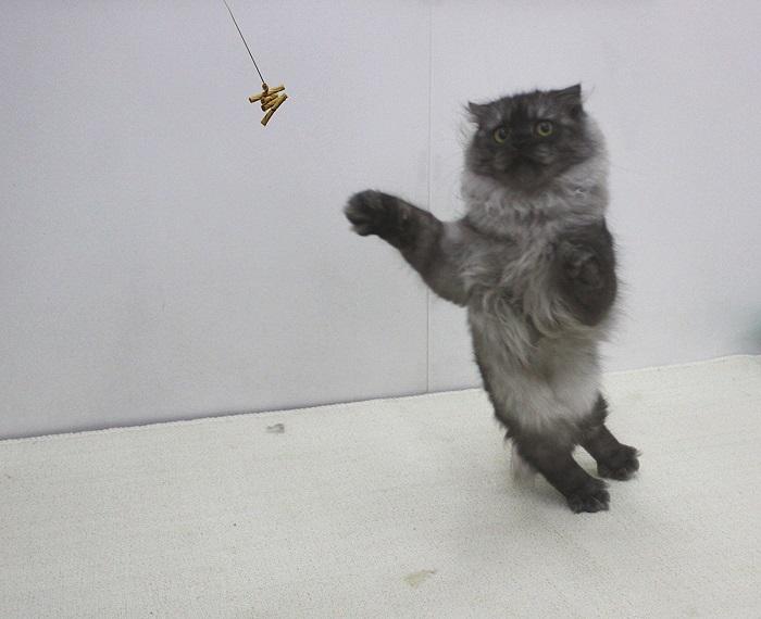 猫が夢中になるおもちゃCatDancerキャットダンサーネコおもちゃ(並行輸入品)猫じゃらし