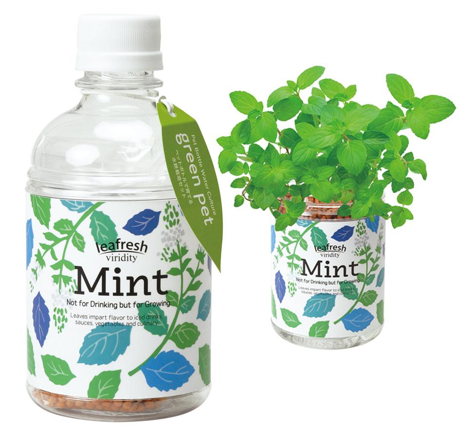 グリーンペット 栽培キット 6種×各12点 計48点 アソートセット