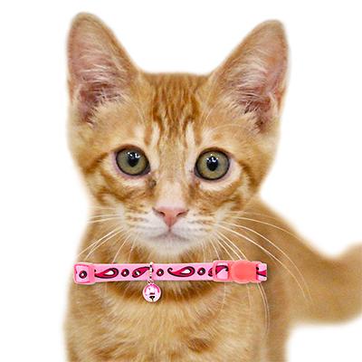 猫 首輪 ラロック アミコ ペイズリー猫カラー セーフティバックルで安全 おしゃれ 猫用首輪 (メール便のみ メール便可 ギフト包装可)