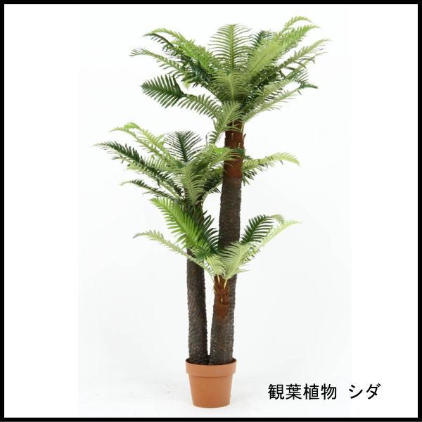 観葉植物 シダ 43 52678 代引き不可 送料無料