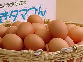 生まれ日の指定はできませんが美味しくて安心 送料込 チープ 普段使い卵80個入