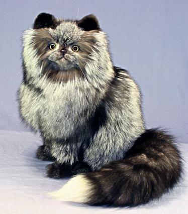 ぬいぐるみ 猫 ぬいぐるみ猫 ヒマラヤン銀猫