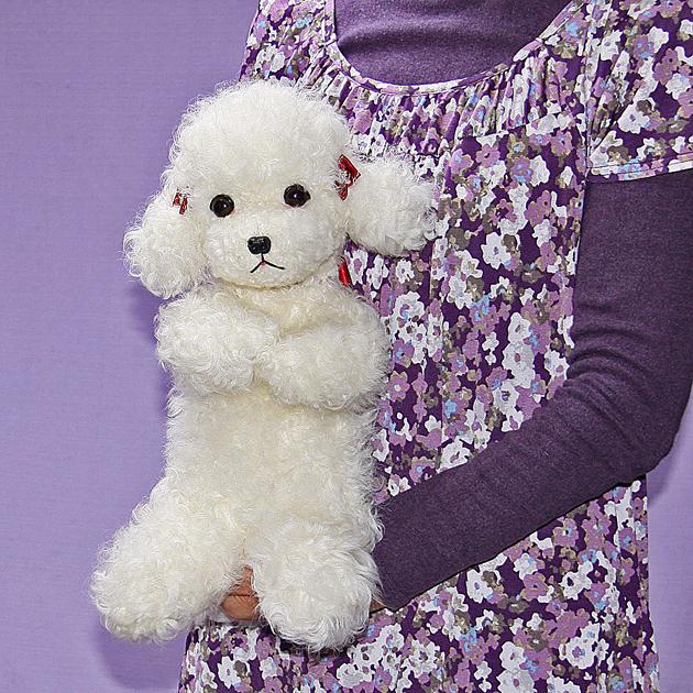 Dog poodle and toy poodle / plush / teacuppoodle (large) /