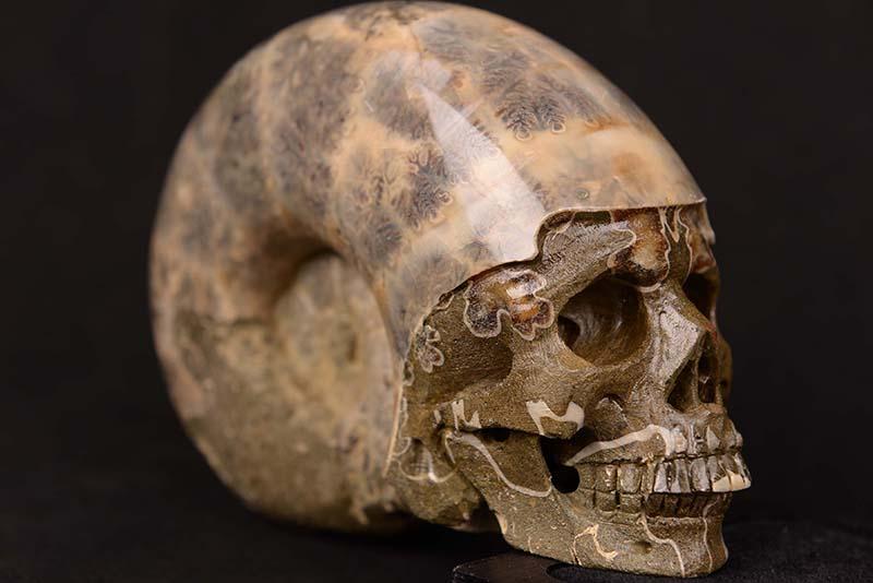 【一点物】アンモナイト化石 ヒューマンスカル(人間頭蓋骨) カービング(彫刻) 1125g 白亜紀 マダガスカル産【送料無料】
