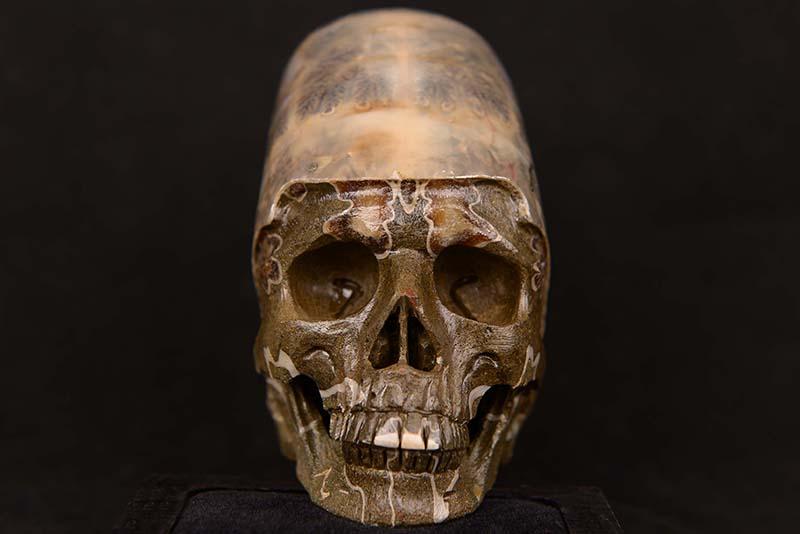 アンモナイト化石ヒューマンスカル(人間頭蓋骨)カービング(彫刻)