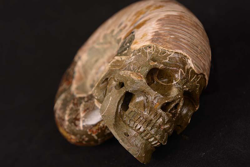 【一点物】アンモナイト化石 ヒューマンスカル(人間頭蓋骨) カービング(彫刻) 1519g|白亜紀|マダガスカル産【送料無料】