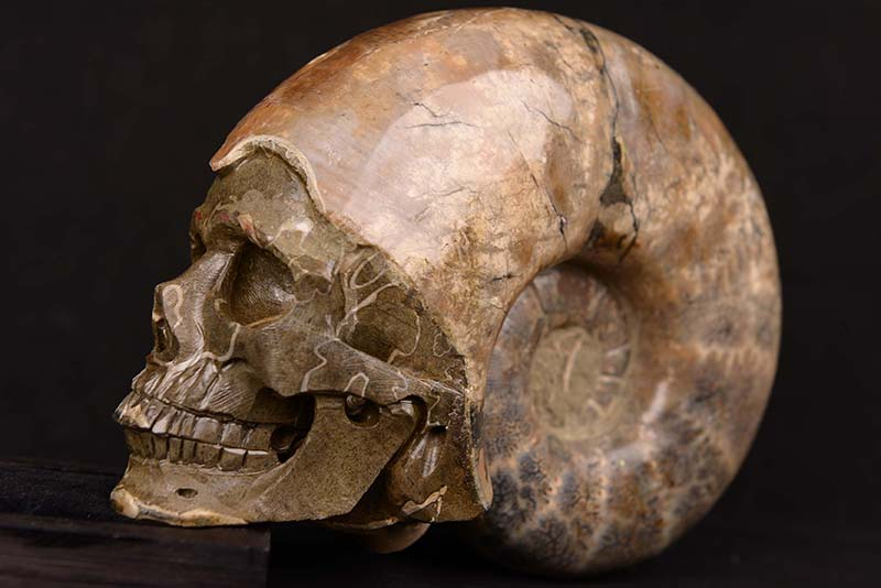 【一点物】アンモナイト化石 ヒューマンスカル(人間頭蓋骨) カービング(彫刻) 1857g|白亜紀|マダガスカル産【送料無料】
