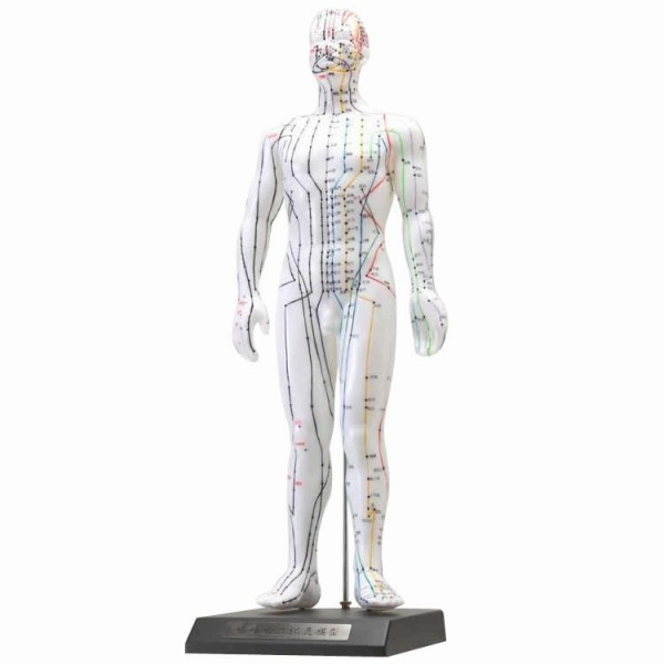 人体模型シリーズ けいけつくんII(WHO新規格対応経絡経穴鍼灸模型) (代引き不可)【送料無料】