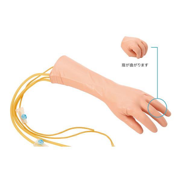 手背の静脈注射シミュレーター(看護実習モデル人形) 点滴注射実習 M-151-0【代引不可】