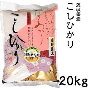 米 日本米 Aランク 30年度産 茨城県産 こしひかり 20kg ご注文をいただいてから精米します。【精米無料】【特別栽培米】【新米】【コシヒカリ】(代引き不可)