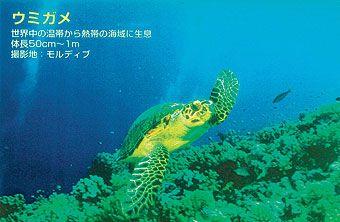 大特価!! <Too>バックライトフィルム BP-G II IJR24-59PD(き) (裏打ちタイプ) <Too>バックライトフィルム/ 610mmx20m II IJR24-59PD(き), 卸問屋 ザフールセールショップ:0f867986 --- kventurepartners.sakura.ne.jp