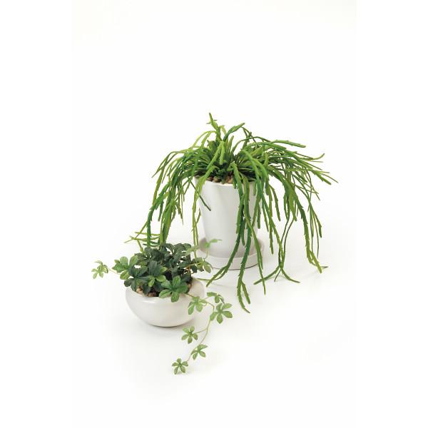 GREENPARK シュガーバイン リプサリス2個セット(造花) 室内装飾品 花 グリ-ン ア-トアレンジ花 PRSY-0101(代引不可)【int_d11】