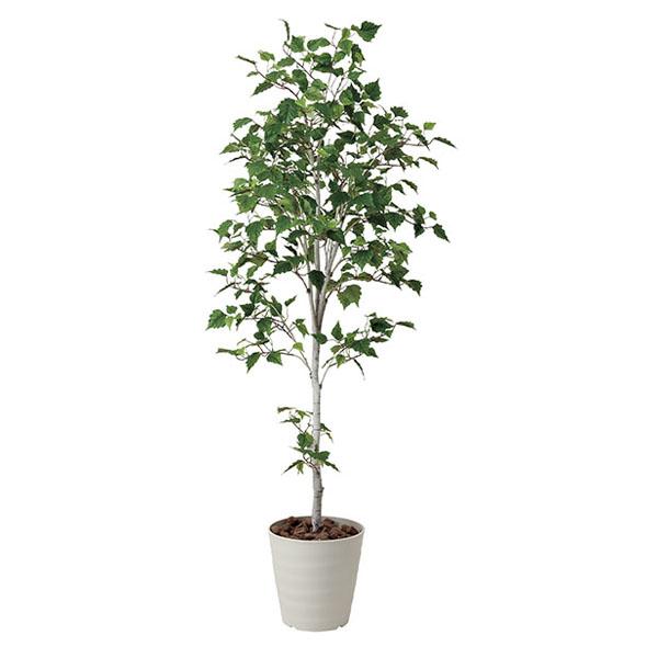 アートフラワー 人工観葉植物 光触媒 光の楽園 白樺シングル1.8 (代引き不可)【送料無料】
