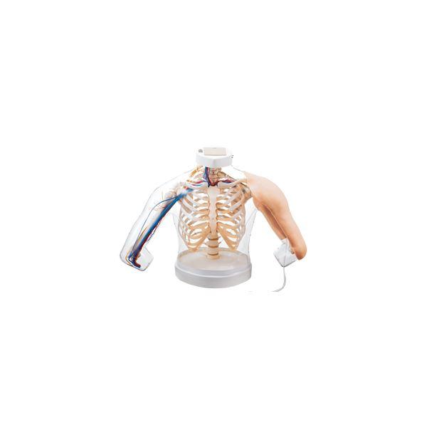 上腕部筋肉注射説明模型(看護実習モデル人形) 水注入可 ランプ/ブザー/収納ケース付き M-155-0【代引不可】