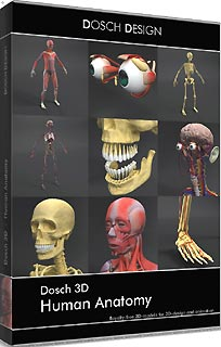 DOSCH DESIGN DOSCH 3D: Human Anatomy D3D-HUAN(代引き不可)
