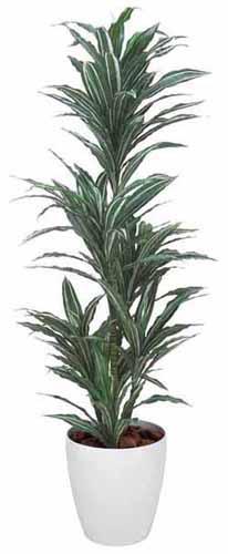 アートグリーン 人工観葉植物 光触媒 光の楽園 ワーネッキー1.8(代引き不可)【送料無料】【S1】