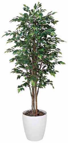 アートグリーン 人工観葉植物 光触媒 光の楽園 ロイヤルベンジャミン1.6(代引き不可)【送料無料】【S1】
