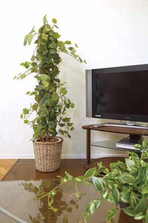 アートグリーン 人工観葉植物 光触媒 光の楽園 グレープツリー1.5(代引き不可)【送料無料】