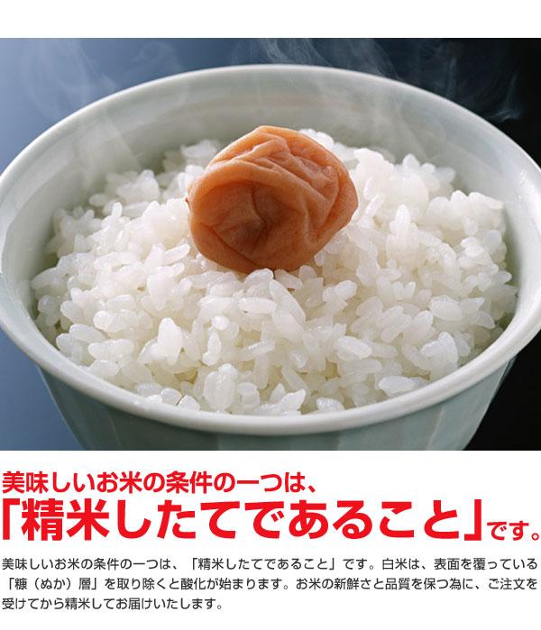 米 日本米 30年度産 北海道産 ゆめぴりか 60% & 福井県産 ミルキークイーン 40% ブレンド米 20kg ご注文をいただいてから精米します。【精米無料】【特別栽培米】【こしひかり】【新米】(代引き不可)
