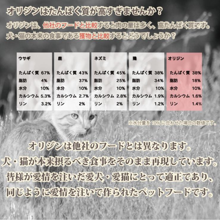 オリジン キャット&キトゥン 5.45kg 正規品【ポイント10倍】