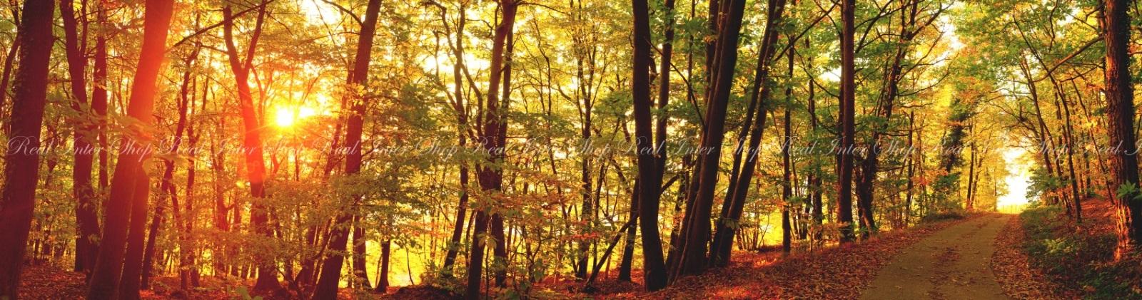 絵画風 壁紙ポスター (はがせるシール式) 緑黄紅の森林浴 紅葉と秋の陽射し 黄葉 もみじ 秋の景色 癒し パノラマ キャラクロ KYO-105X1 (パノラマX版 2210mm×576mm) 建築用壁紙+耐候性塗料 インテリア