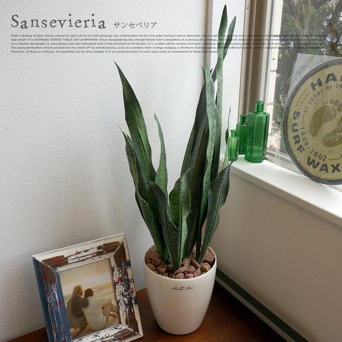 サンセベリア 光触媒 イミテーショングリーン テーブルタイプ