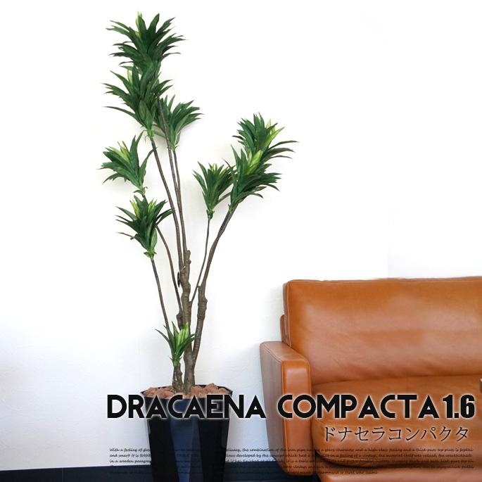 ドラセナコンパクタ 1.6(dracaena compacta1.6)光触媒 イミテーショングリーン(Imitation Green)