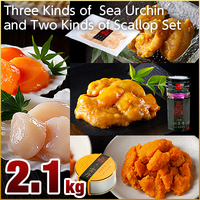 Three Kinds of Island Sea Urchin and Two Kinds of Scallop Set