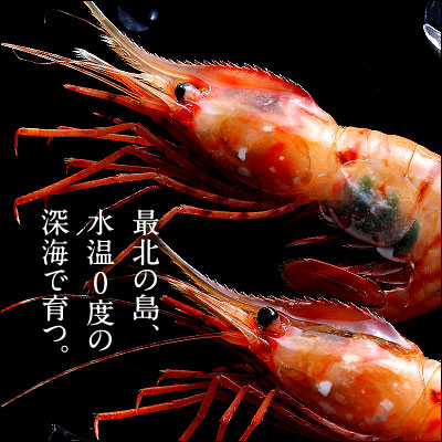 Rebun and Rishiri Island students have around 500 g prawns Botan shrimp Hokkaido souvenir sweets gift