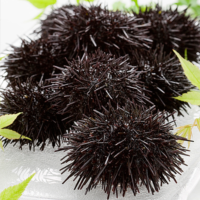 Frozen shelled purple sea urchin × 10 Hokkaido gift request senior citizen's day 2015 gifts giveaway