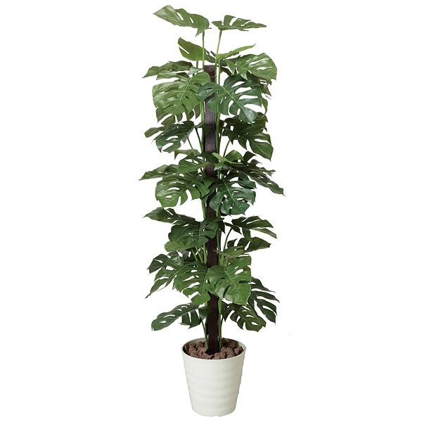 賞葉植物光觸媒人造植物綠色光觸媒賞葉植物蒙斯太拉(L尺寸)(郵費包含郵費)