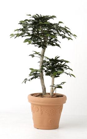 【受注】【人工植物】【無光触媒加工】 サザンカ 1.0m