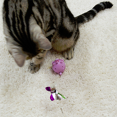 キャティーマン じゃれ猫 くるころキャッチ ドギーマンハヤシ ▼a ペット グッズ 猫 キャット おもちゃ