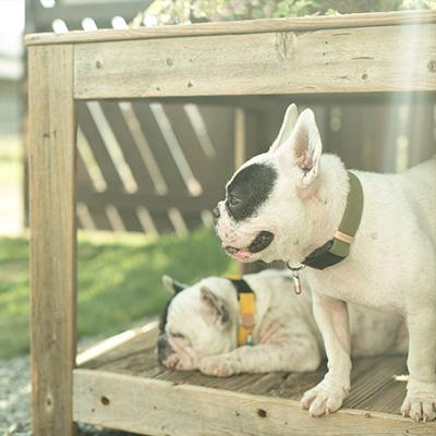 ■クチタプ [QUCHITAP] セボナー[CEBONNER] カラー ネイビー フラッペ ▽b ペット グッズ 犬 ドッグ アクセサリー 首輪