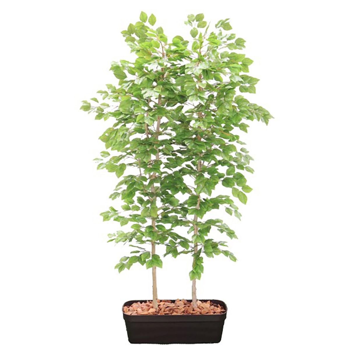 独特な  H1800mm ブナの木パーテーション HBKD-2-025 観葉植物 オフィスグリーン フェイクグリーン インテリアグリーン:R.F.YAMAKAWA-花・観葉植物