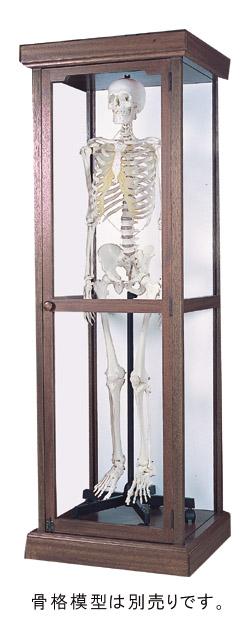 骨格模型収納ケース(ガラス入り)