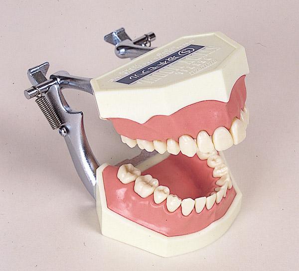 複製歯牙着脱模型