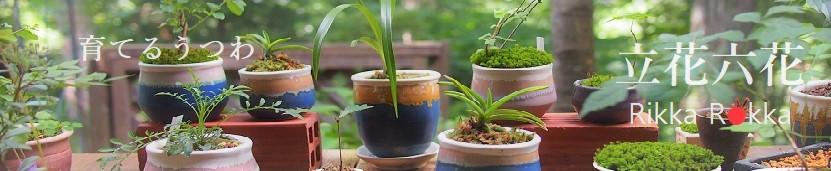 立花六花:育てるうつわ 食器と花器と小品盆栽鉢