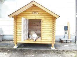 ログペットハウス 1250型 スタンダード 犬小屋 屋外 大型犬 中型犬 犬舎 ラブラドールレトリバー ゴールデンレトリバー 柴犬