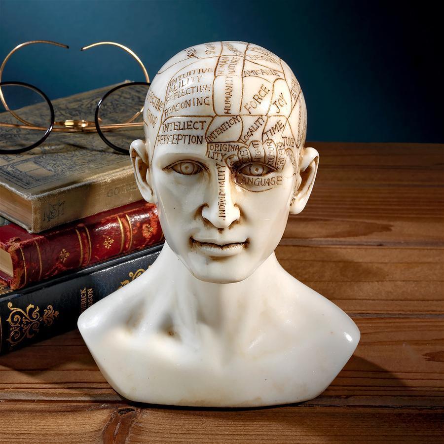 デザイン・トスカノ製 西洋式 骨相学の人体模型 顔相彫像 人相占いの模型 彫刻(輸入品)