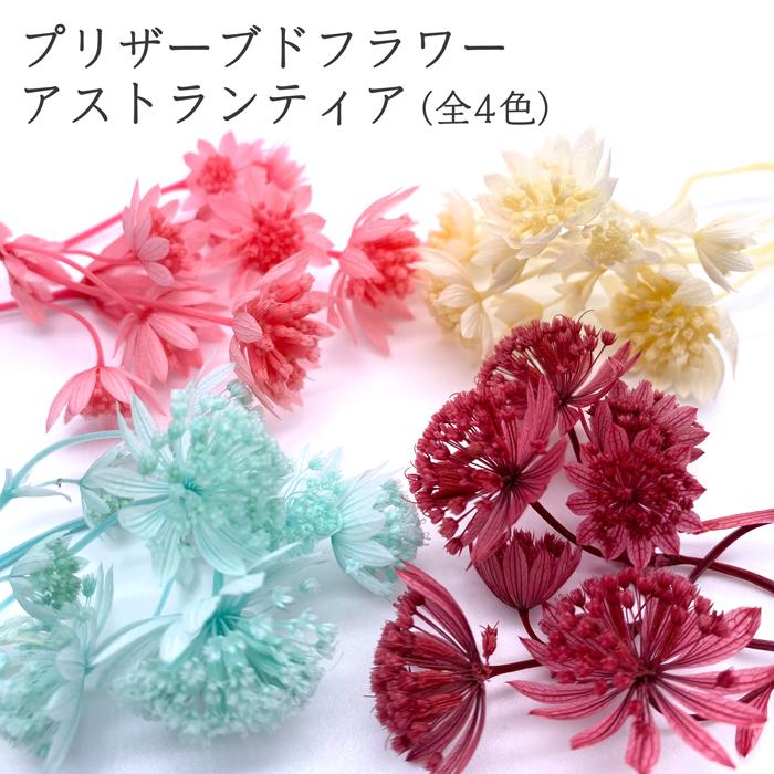 ハーバリウム ボタニカルキャンドル ワックスサシェ 永遠の定番モデル 売買 リースなどに使えるフラワーマテリアル クリックポスト対応 花材 フラマテ プリザーブドフラワー アストランティア 全4色