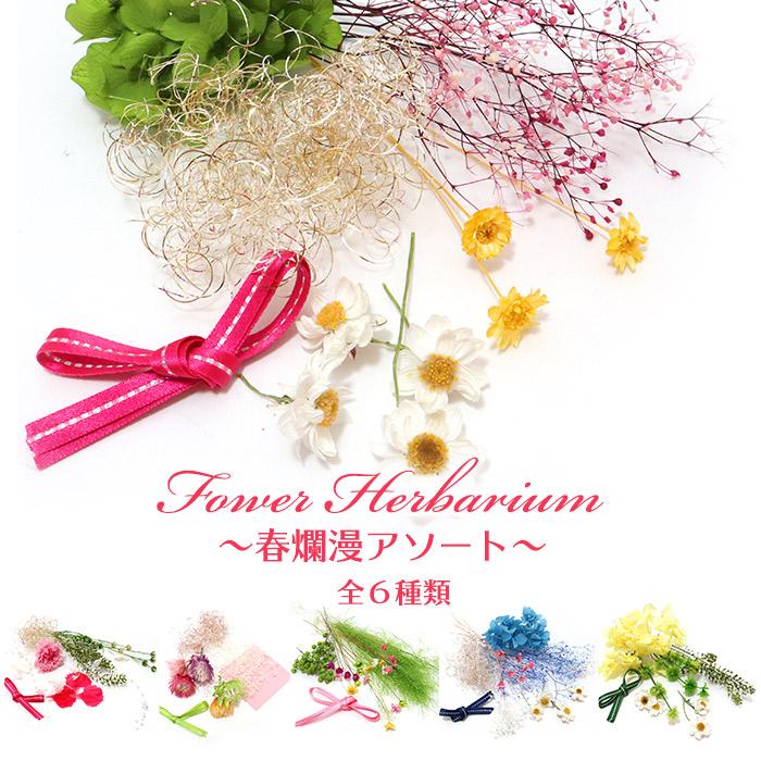 日本未発売 花かんざし ドライフラワー プリザーブドフラワー 春らんまん ハンドメイド 購買 クリックポスト対応 花材 春爛漫アソート 花材のみ 材料